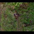 Thumbnail Royalty Free Stock Footage: Venezuela: NL00446