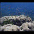 Thumbnail Royalty Free Stock Footage: Venezuela Reef: NL00463