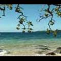 Thumbnail Royalty Free Stock Footage: Fiji: NL00521