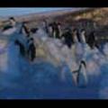 Thumbnail Royalty Free Footage: Antarctica Penguins