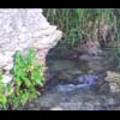 Thumbnail Royalty Free Stock Footage: Stream: NL00539