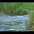 Thumbnail Royalty Free Stock Footage: Stream: NL00542