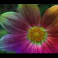 Thumbnail Royalty Free Stock Footage: Psychedelic Flower: NL00564