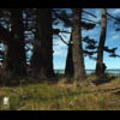 Thumbnail Royalty Free Stock Footage: New Zealand: NL00568