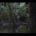 Thumbnail Royalty Free Stock Footage : New Zealand : NL00623