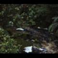 Thumbnail Royalty Free Stock Footage: New Zealand: NL00624