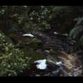 Thumbnail Royalty Free Stock Footage : New Zealand : NL00625