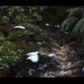 Thumbnail Royalty Free Stock Footage: New Zealand: NL00626