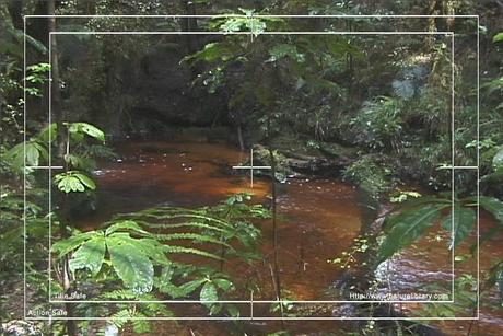 Pay for Royalty Free Stock Footage : Rain Forest : NL00049