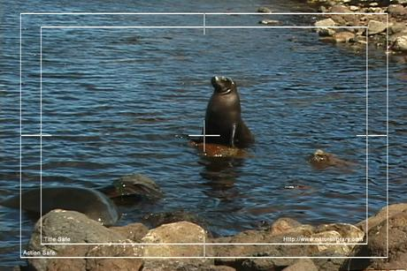 Pay for Royalty Free Stock Footage: Seal: NL00150