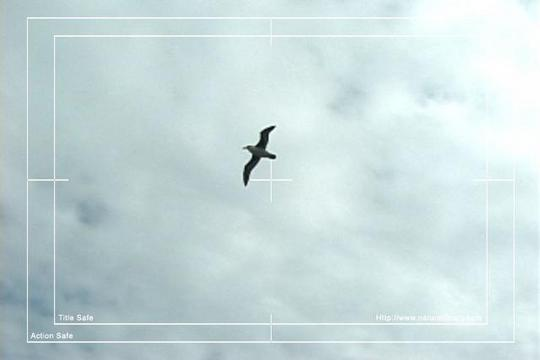 Pay for Royalty Free Stock Footage: Birds: NL00163