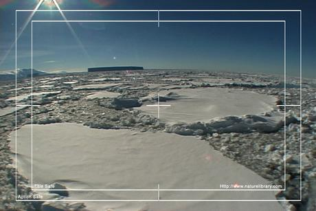 Pay for Royalty Free Stock Footage: Antarctica: NL00174