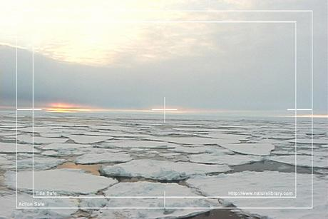 Pay for Royalty Free Stock Footage: Antarctica: NL00264