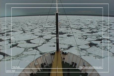 Pay for Royalty Free Stock Footage: Antarctica: NL00275