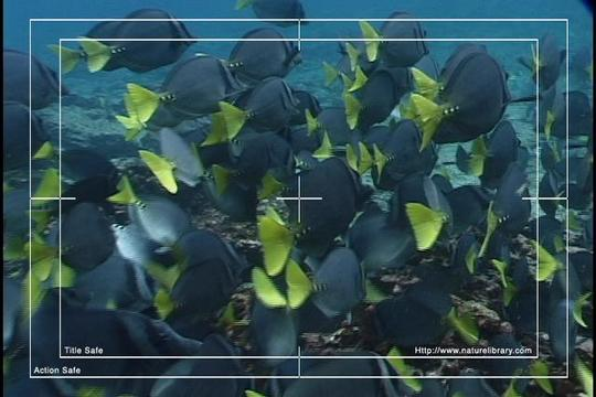 Pay for Royalty Free Stock Footage : Fish : NL00398