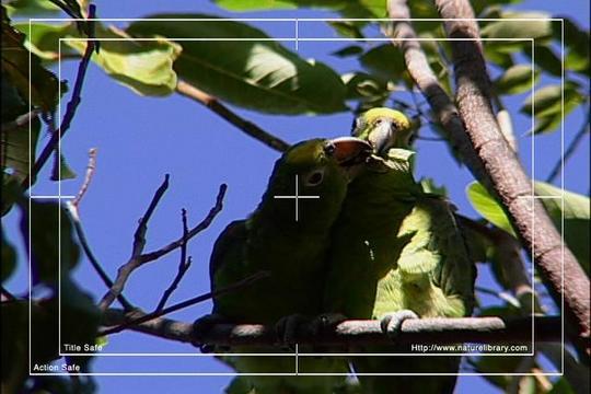 Pay for Royalty Free Stock Footage: Venezuela Birds: NL00455