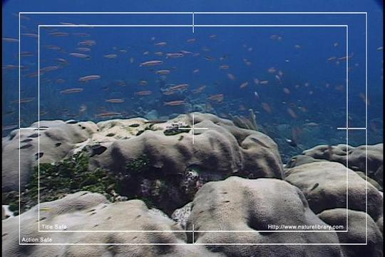 Pay for Royalty Free Stock Footage: Venezuela Reef: NL00463