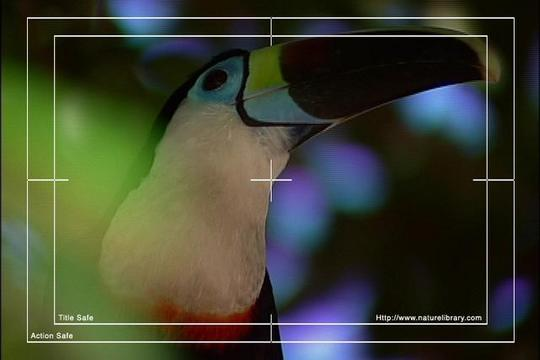 Pay for Royalty Free Stock Footage: Venezuela Birds: NL00474
