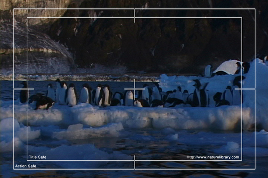 Pay for Royalty Free Stock Footage: Antarctica: NL00529