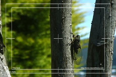 Pay for Royalty Free Stock Footage : Insects : NL00551