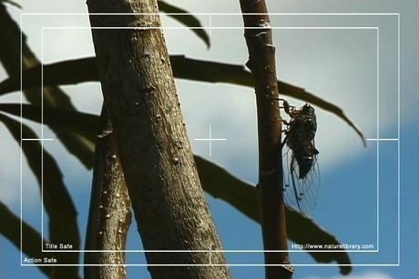 Pay for Royalty Free Stock Footage : Insects : NL00552