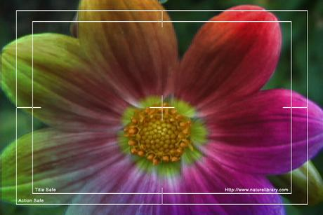 Pay for Royalty Free Stock Footage: Psychedelic Flower: NL00565