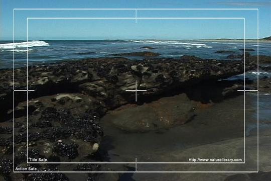 Pay for Royalty Free Stock Footage : New Zealand : NL00576