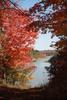 Thumbnail Nature