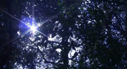 Thumbnail Sunbeam shining through branches of trees_02