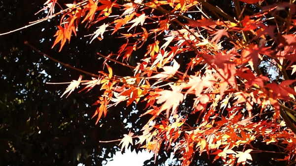 Pay for The close-up of autumnal leaves