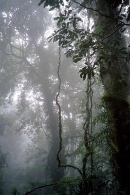 Pay for Dorrigo Nationalpark, Australien