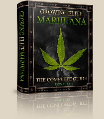 Pay for All.You.Want.To.Know.About.Growing Cannabis Weed Part 2