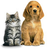 Thumbnail 800 over Dogs and Cats Quality PLR Articles