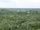 Thumbnail Tree skyline