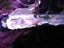 Thumbnail Underwater plant