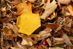 Thumbnail Leaves in autumn