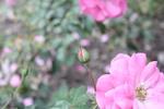 Thumbnail Flower