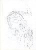 Thumbnail pencil drawing image01