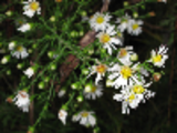 Thumbnail Beautiful White Flowers Stock