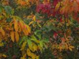 Thumbnail Schöne und bunte Blätter fallen.