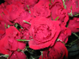 Thumbnail Roses Stock Photo