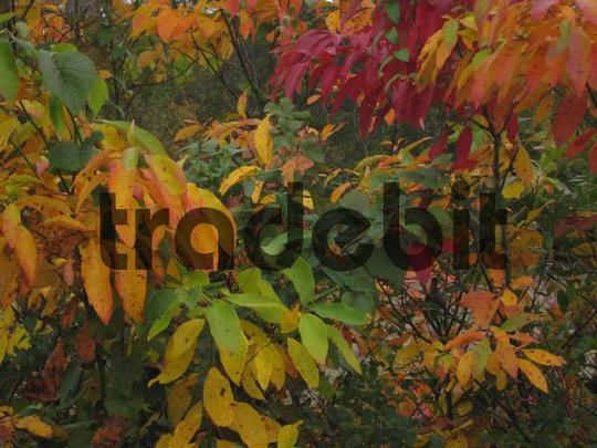 Pay for Hojas de otoño de colores