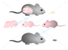 Thumbnail Biomedical vector illustration for paper thesis grey mouse