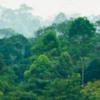 Thumbnail Sounds of the Sumatran Rainforest (morning)