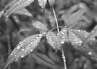 Thumbnail Rain_Drop