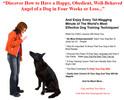 Thumbnail Dog Training PLR Autoresponder Messages