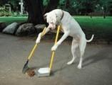Thumbnail Dog Training Techniques
