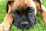 Thumbnail Dog Articles with PLR