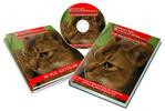 Thumbnail Raising Exotic Bengal Kittens mrr