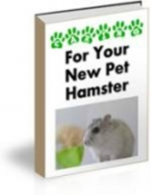 Pay for For Your New Pet Hamster mrr